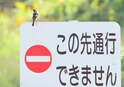 ジョウビタキ1510bg.jpg
