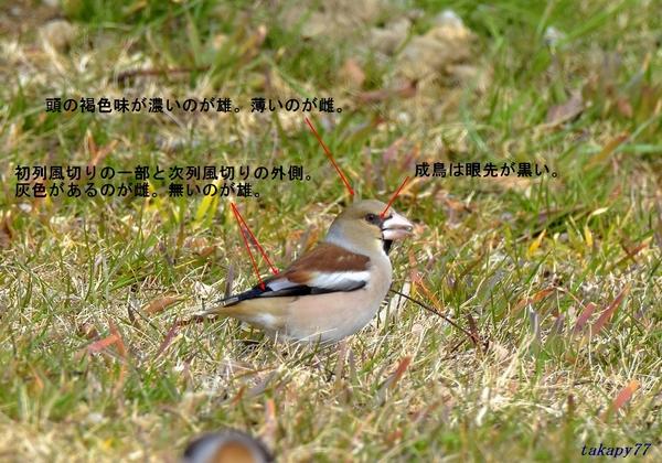 シメ識別1802.jpg