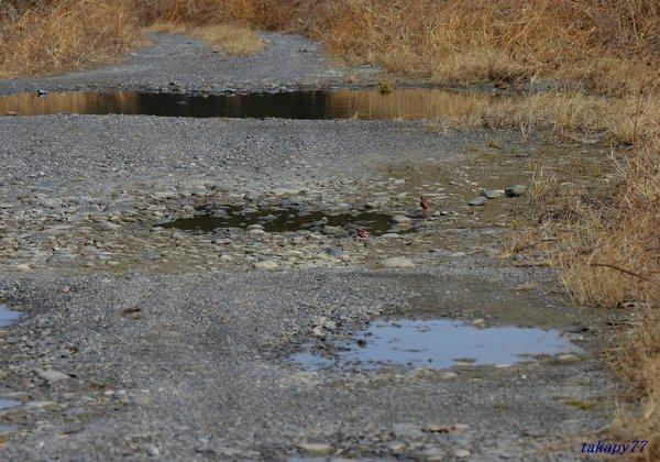 水溜り1902ba57t.jpg