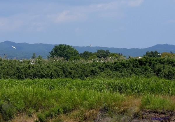 鷺山1906aa57s.jpg