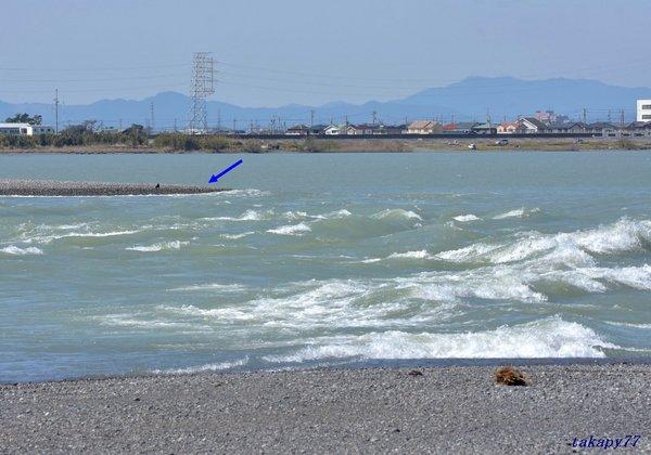 T川河口1803ab55.jpg